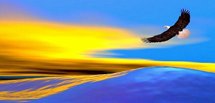 aguila-volando